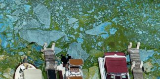 toxic algae bloom