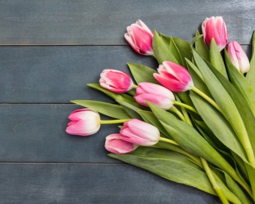 flowers_canstockphoto54751774 525x420