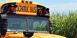 school-bus-525x420.png