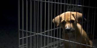 animal-cruelty_canstockphoto1159019-1000x800.jpg