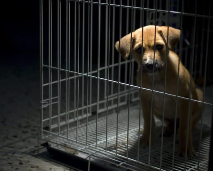 dog in crate in dark room