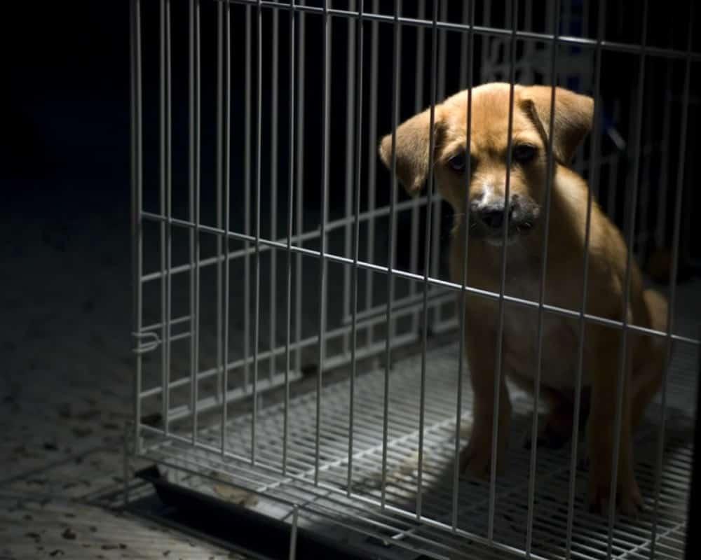 dog in crate in dark room
