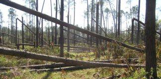 florida timber industry