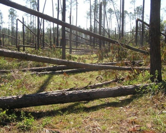 florida timber industry