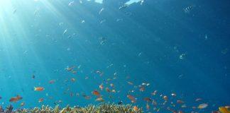 coral reefs_hiroko-yoshii-9y7y26C-l4Y-unsplash 525x420