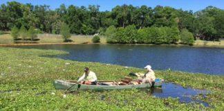 Lake Henrietta cleanup_sustainabletallahasseedotcom 525x420